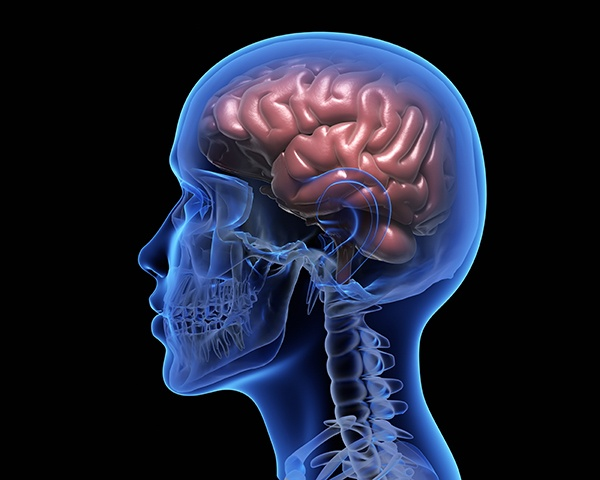 Té verde y cerebro